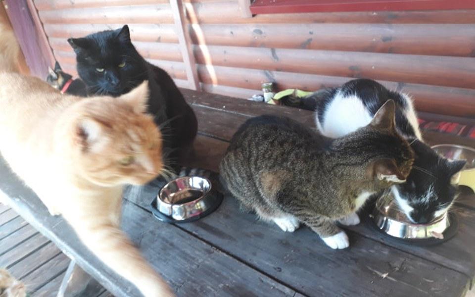 Zbiórka Wolno żyjące koty proszą o karmę - zdjęcie główne