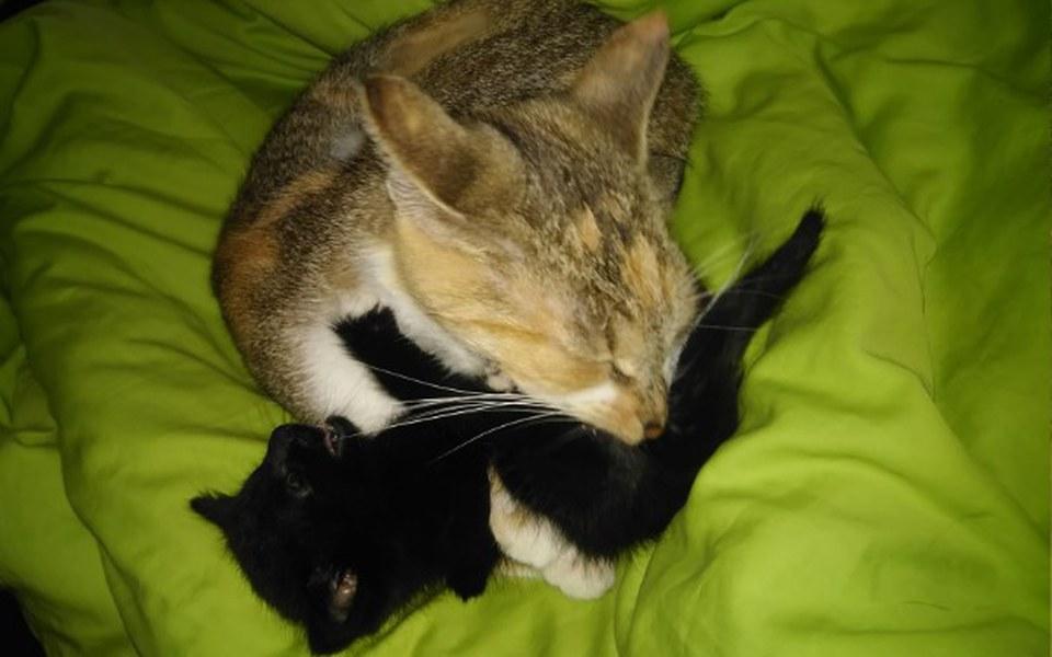 Zbiórka Młoda panna z kotami - zdjęcie główne