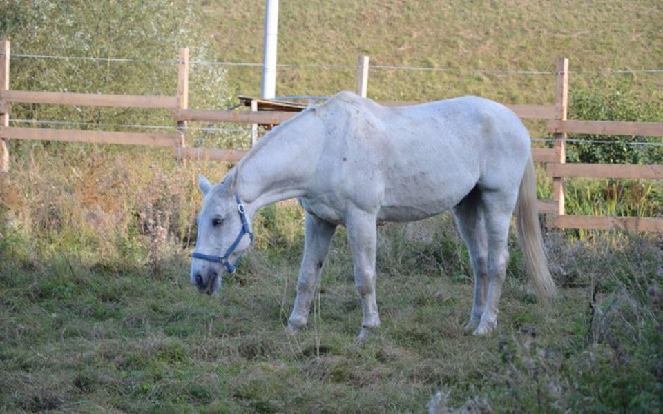 Zbiórka Pasza dla końskich staruszków - zdjęcie główne