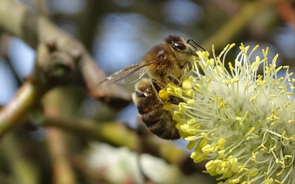 Zbiórka Miód. Zdrowie. Pszczoły. Życie! - zdjęcie główne