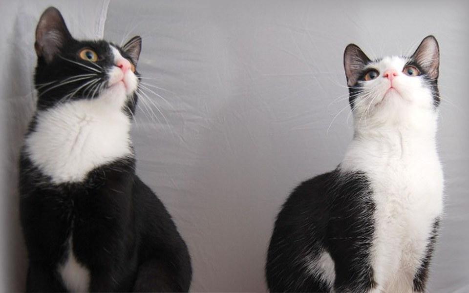 Zbiórka Jedzenie i żwirek dla kotów - zdjęcie główne