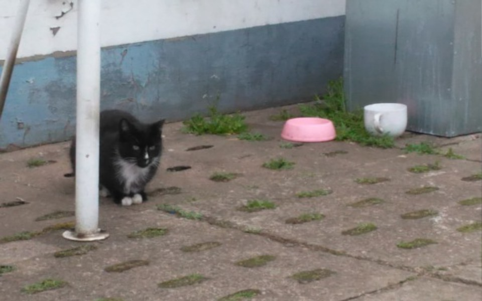 Zbiórka na karmę dla kotów - zdjęcie główne