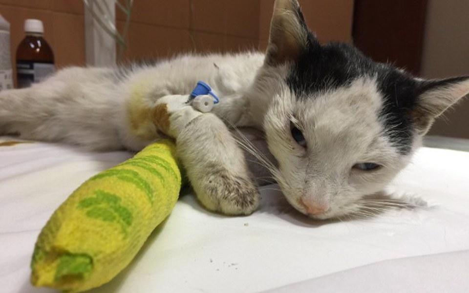 Zbiórka Kot, który pokonał śmierć - zdjęcie główne