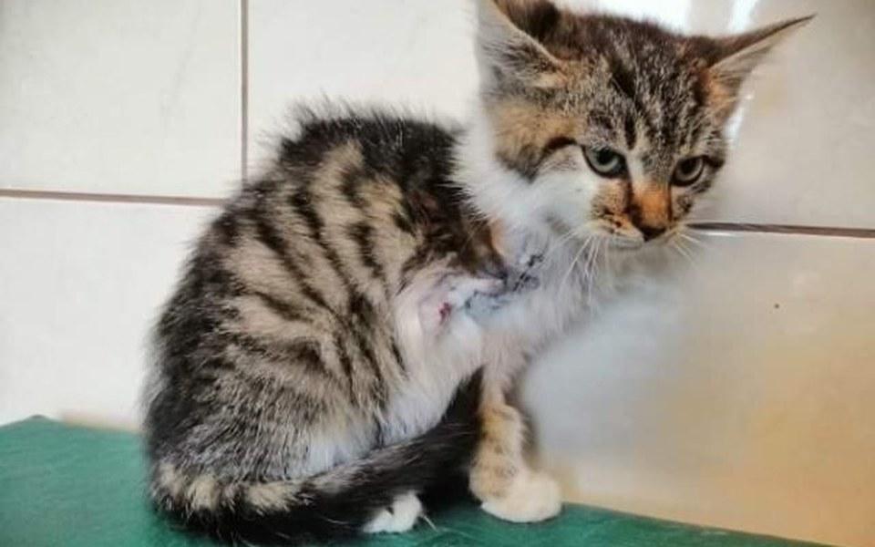 Zbiórka Lila- kocie dziecko na 3 łapkach - zdjęcie główne