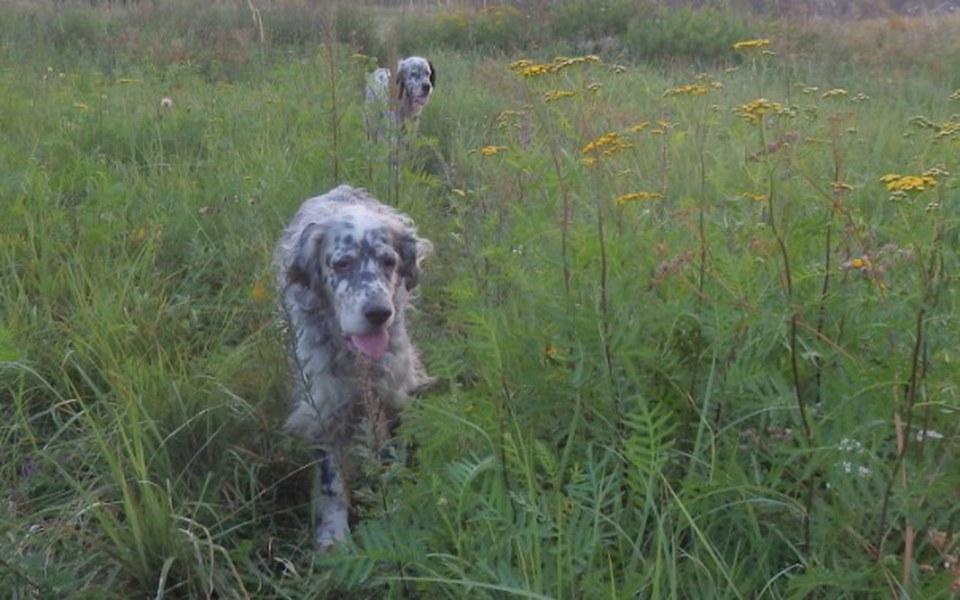 Zbiórka Przedłużyć psie życie - zdjęcie główne