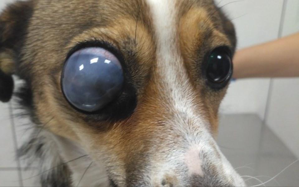 Zbiórka Na ratunek dla slepaczka - zdjęcie główne