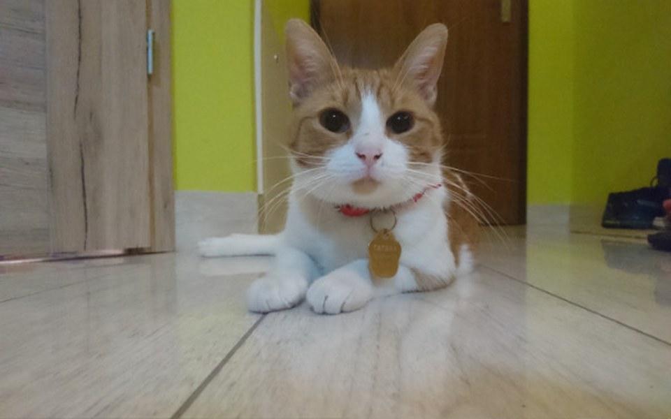 Zbiórka Na operacje kotka - zdjęcie główne