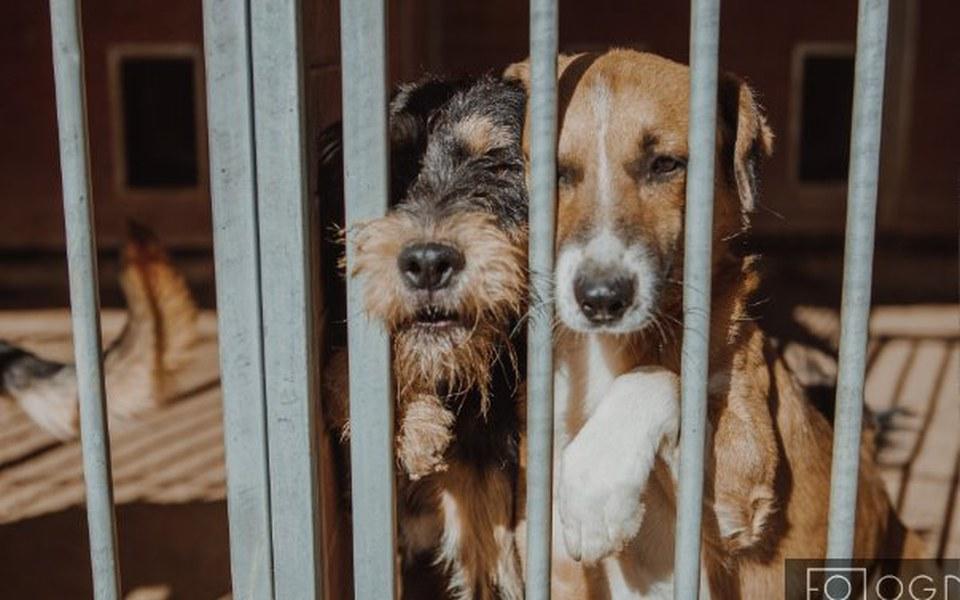 Zbiórka Koniec z więzieniem w schronisku - zdjęcie główne