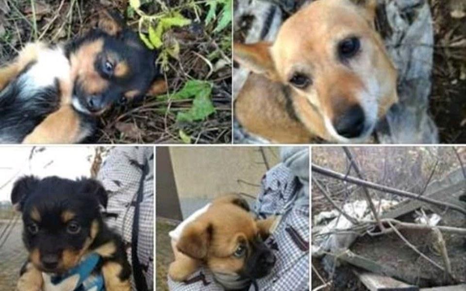 Zbiórka Na Transport dla 11 psów... - zdjęcie główne