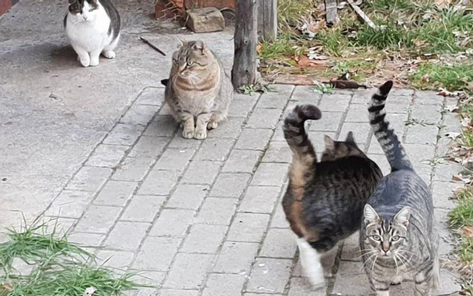 Zbiórka Kot nie ślimak domku nie nosi II - zdjęcie główne