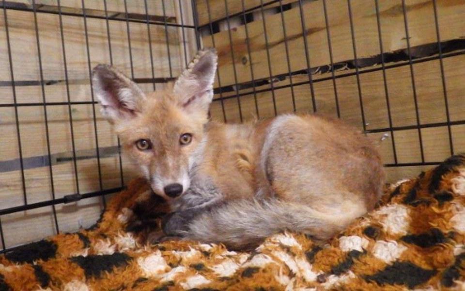Zbiórka Pogotowie dla dzikich zwierząt - zdjęcie główne