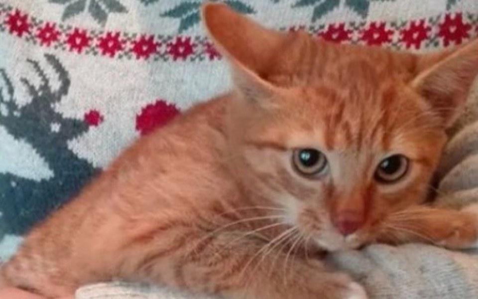 Zbiórka Kocia rodzina błaga o pomoc !!! - zdjęcie główne