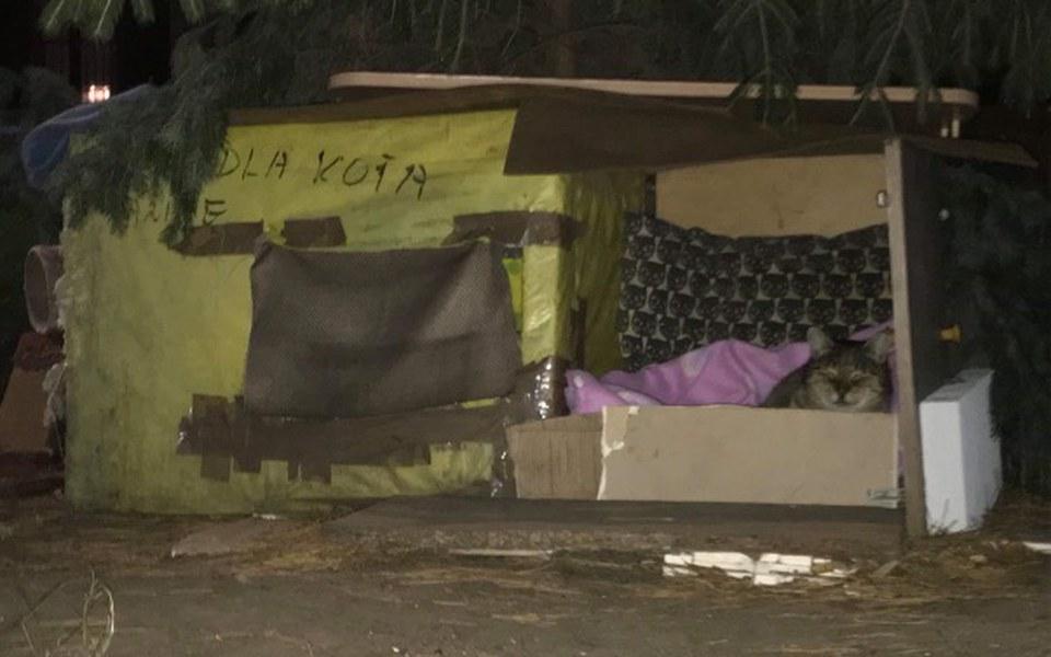 Zbiórka Domki dla bezdomnych kociaków - zdjęcie główne