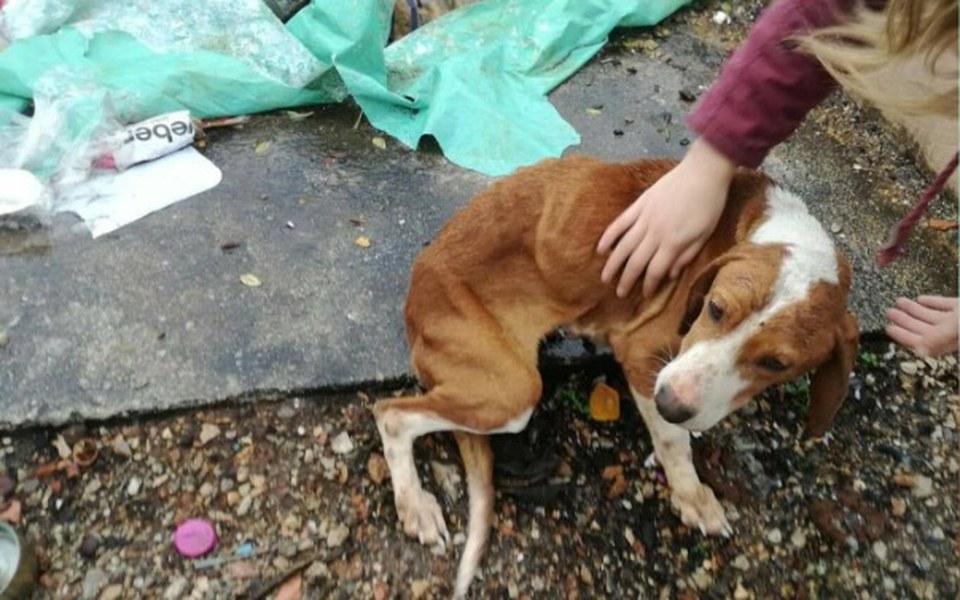 Zbiórka Głodujące psy w Czarnogórze!!! - zdjęcie główne
