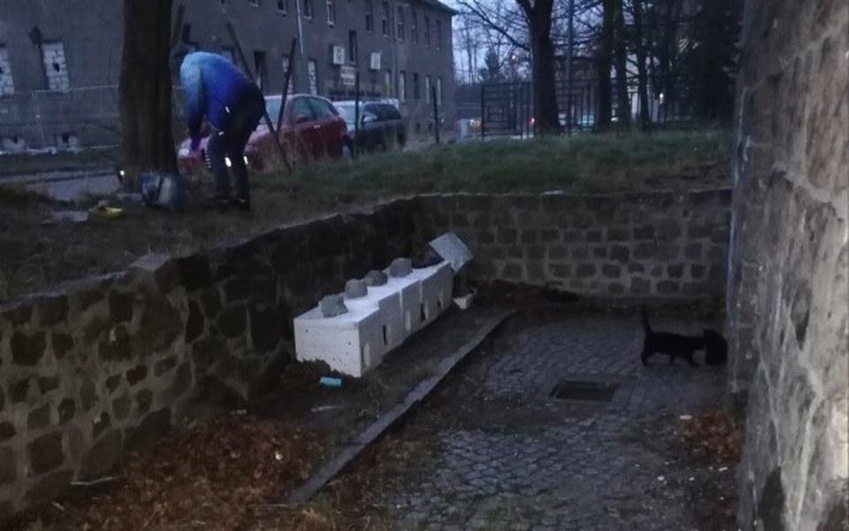 Zbiórka Dokarmianie dzikich kotów. - zdjęcie główne