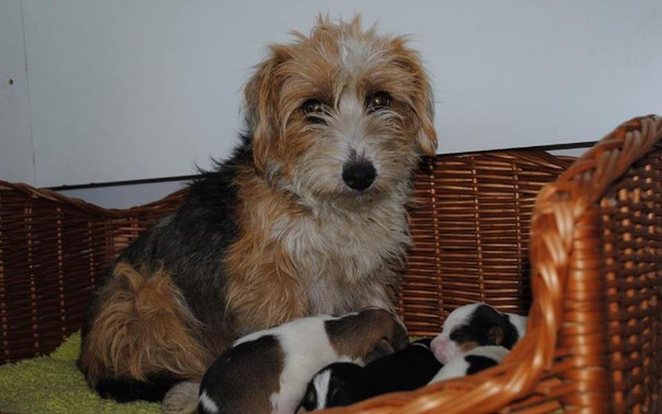Zbiórka Dla mamuśki i pięciu szczeniaków - zdjęcie główne