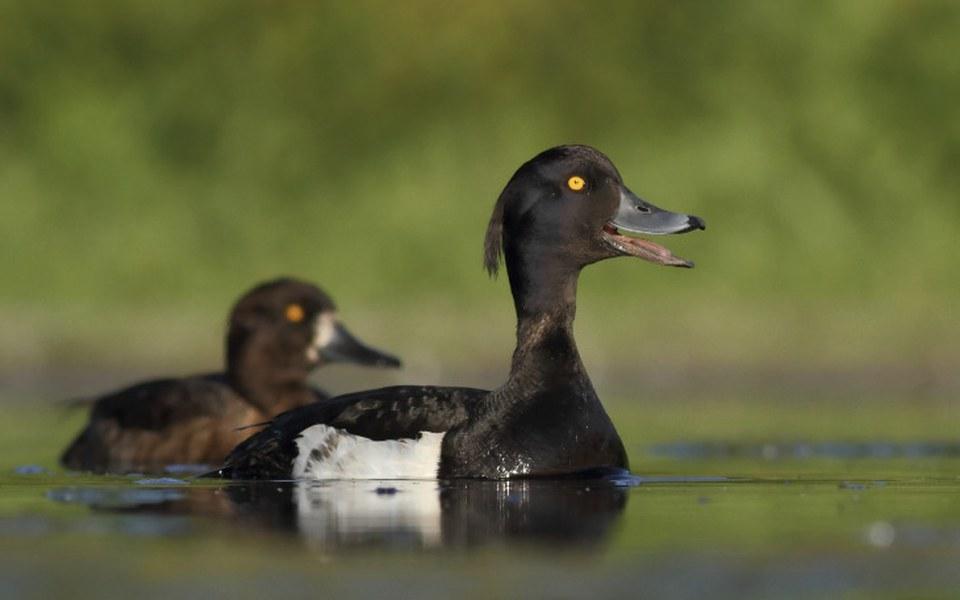Zbiórka NIE dla mordowania ptaków - zdjęcie główne