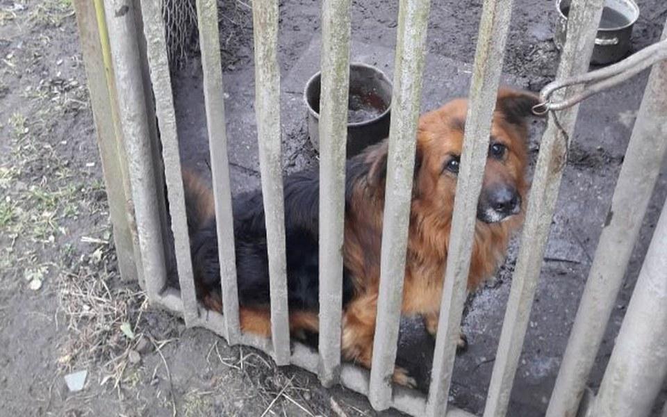 Zbiórka Zbiórka dla potrzebujących psów - zdjęcie główne