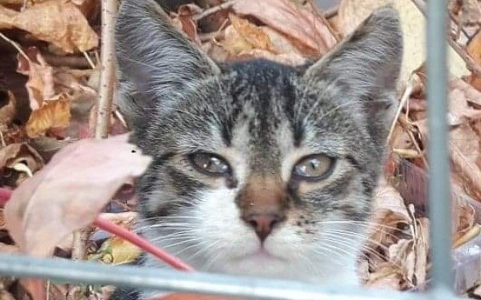 Zbiórka Na karmę dla bezdomnych kotów - zdjęcie główne