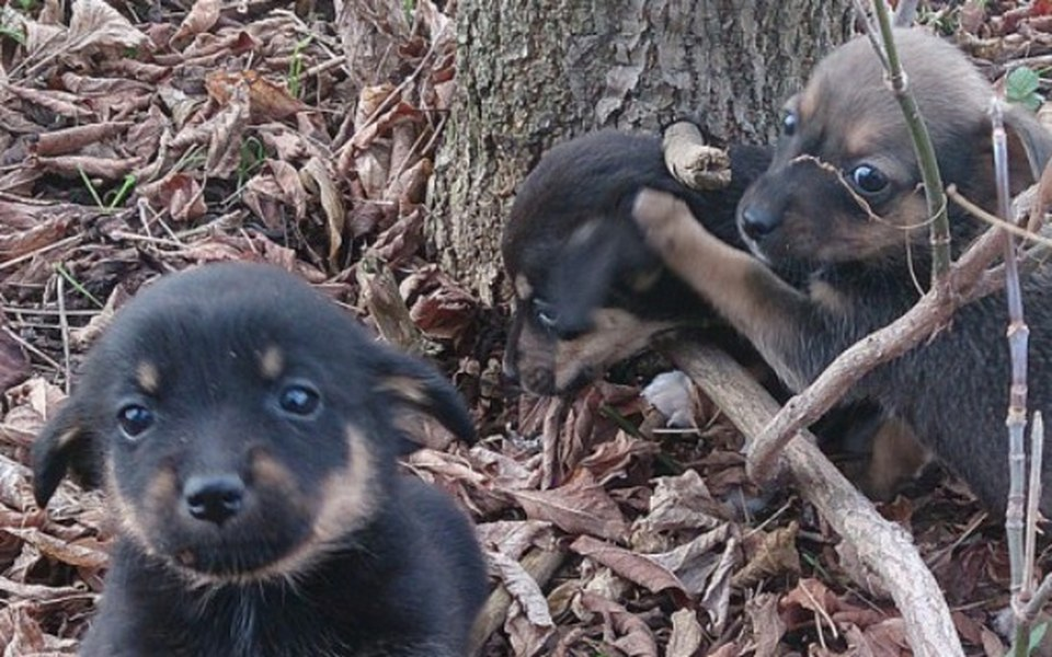 Zbiórka Porzucone Pieski-potrzebna pomoc - zdjęcie główne