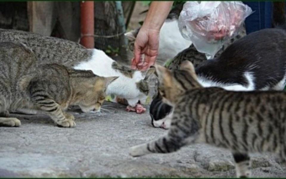 Zbiórka Bezdomne koty potrzebują pomocy - zdjęcie główne