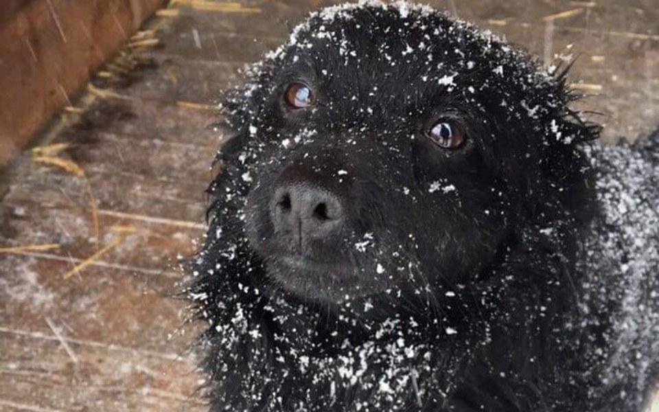 Zbiórka Słoma w budach zimą = życie - zdjęcie główne
