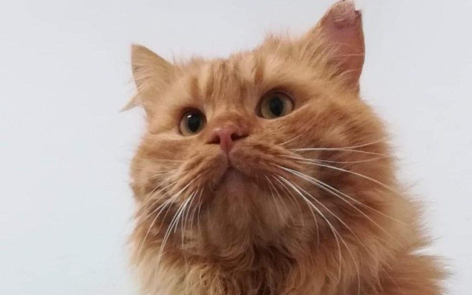 Zbiórka Oscar - boski kot ❤❤ - zdjęcie główne