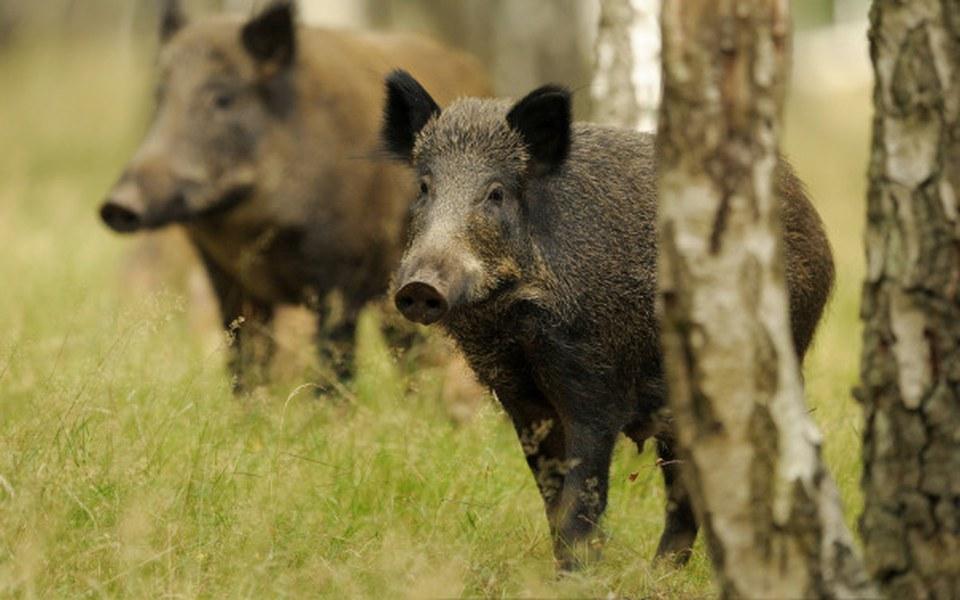 Zbiórka Ratuj polskie dziki przed mordem - zdjęcie główne