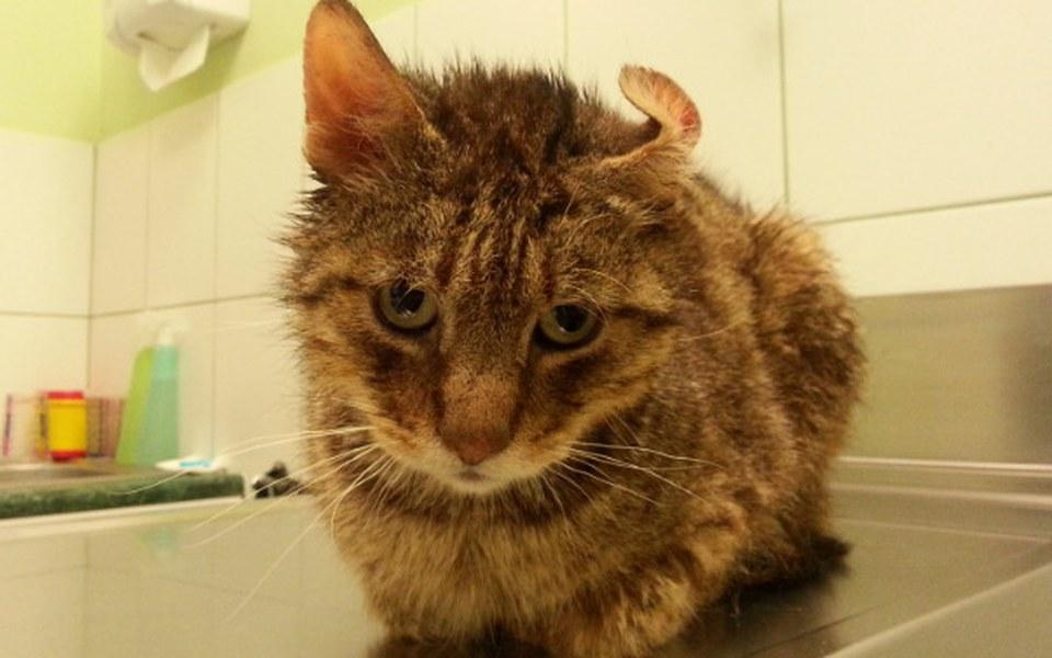Zbiórka Kot wyrzucony w kartonie - zdjęcie główne