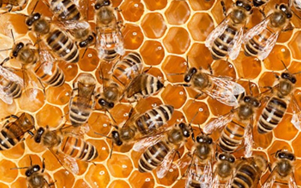 Zbiórka Ule dla pszczół - zdjęcie główne