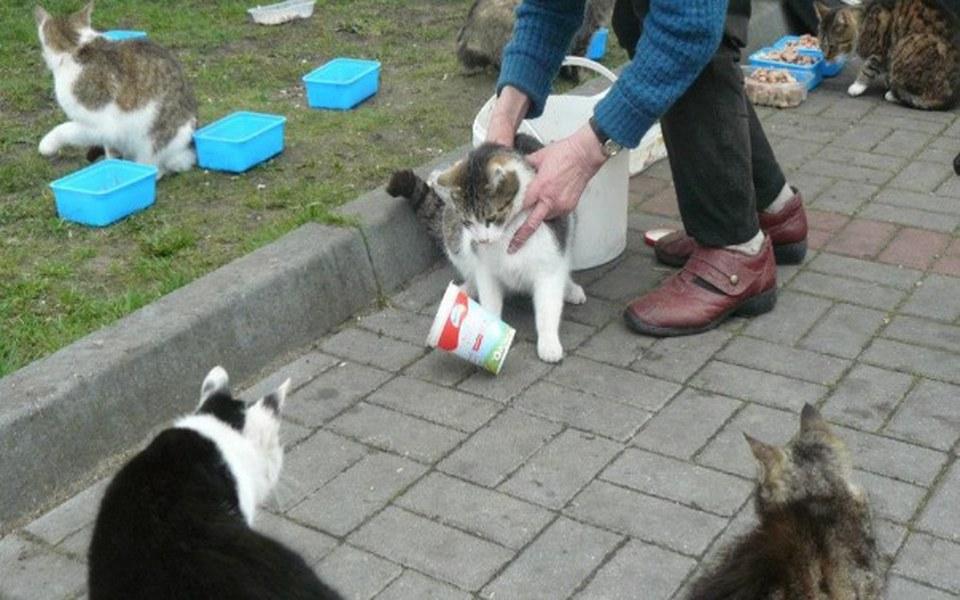 Zbiórka Ratujemy głodujące bezdomne koty - zdjęcie główne
