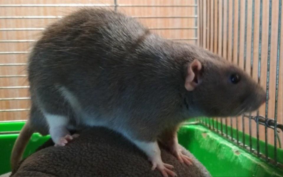 Zbiórka Leczenie szczurów z Ferajny - zdjęcie główne