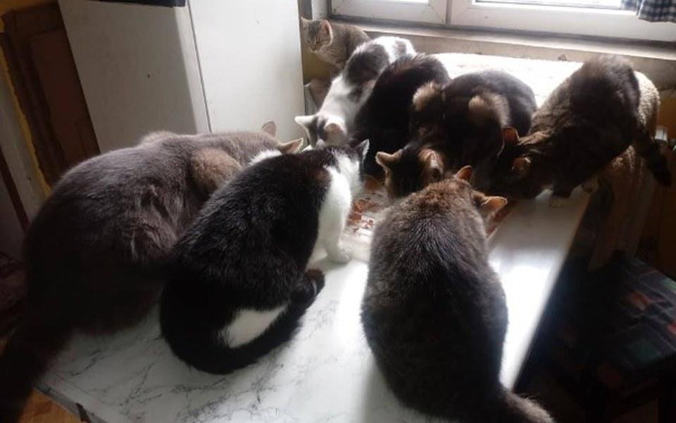 Zbiórka Ratujemy kociaki porzucone - zdjęcie główne