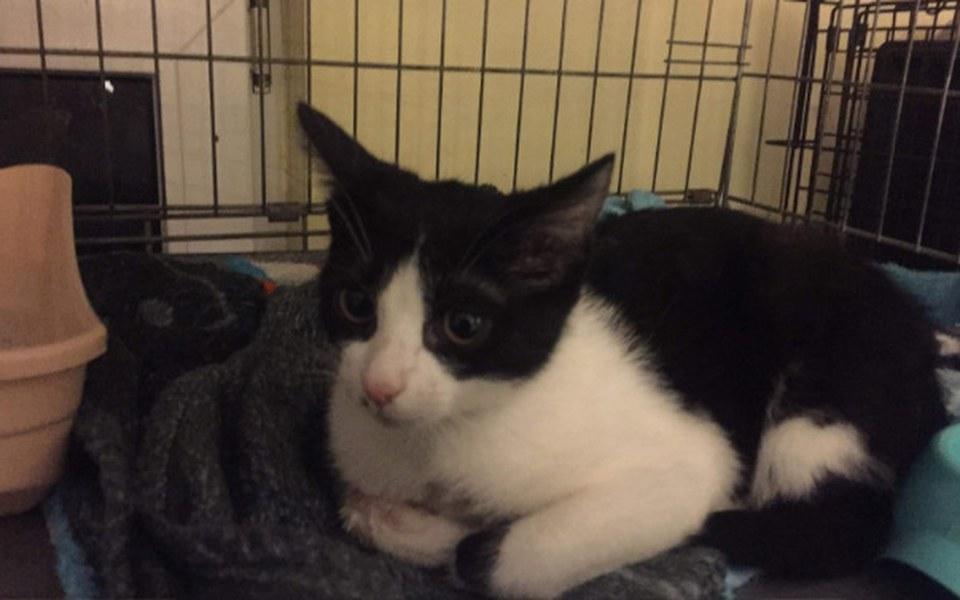 Zbiórka Pomoc dla małej kotki - zdjęcie główne
