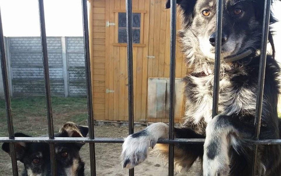 Zbiórka Rachunki za dom zwierząt - zdjęcie główne