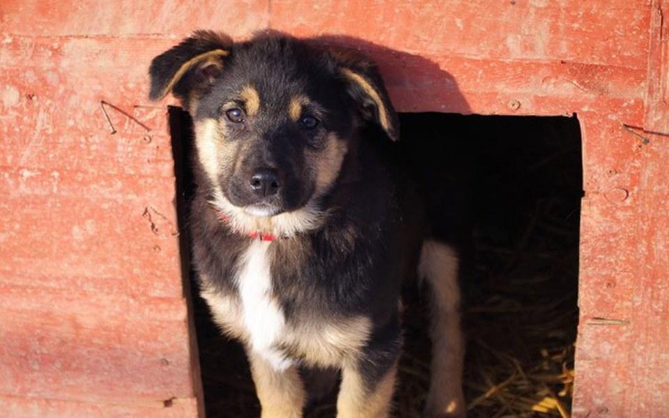 Zbiórka Grosik dla zwierzaków - zdjęcie główne