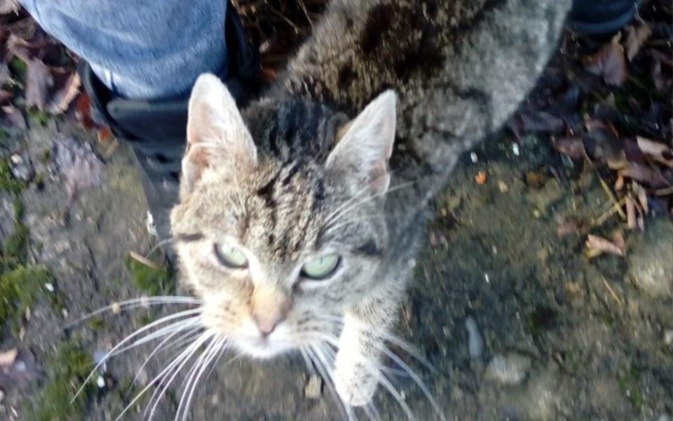 Zbiórka Figa - skrajnie wychudzona kotka - zdjęcie główne