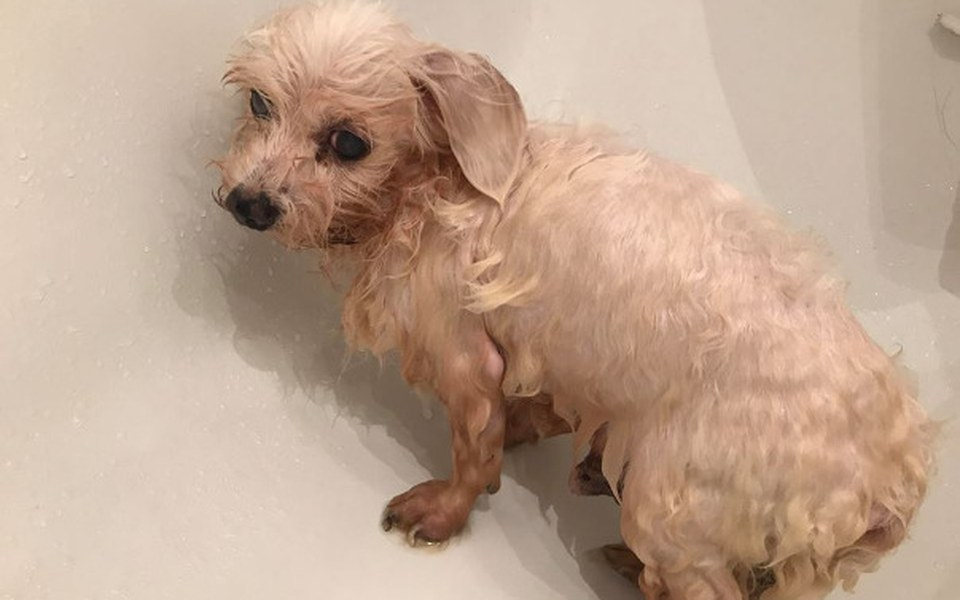 Zbiórka Psie nieszczęście prosi o pomoc - zdjęcie główne