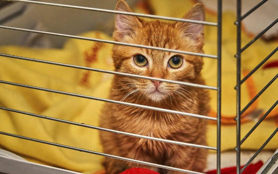 Zbiórka Kociaki potrzebują pilnie pomocy - zdjęcie główne