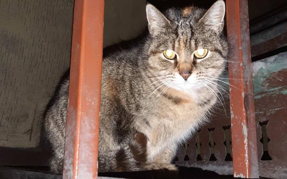 Zbiórka Dla 2 kotek ! Nowy dom i badania - zdjęcie główne