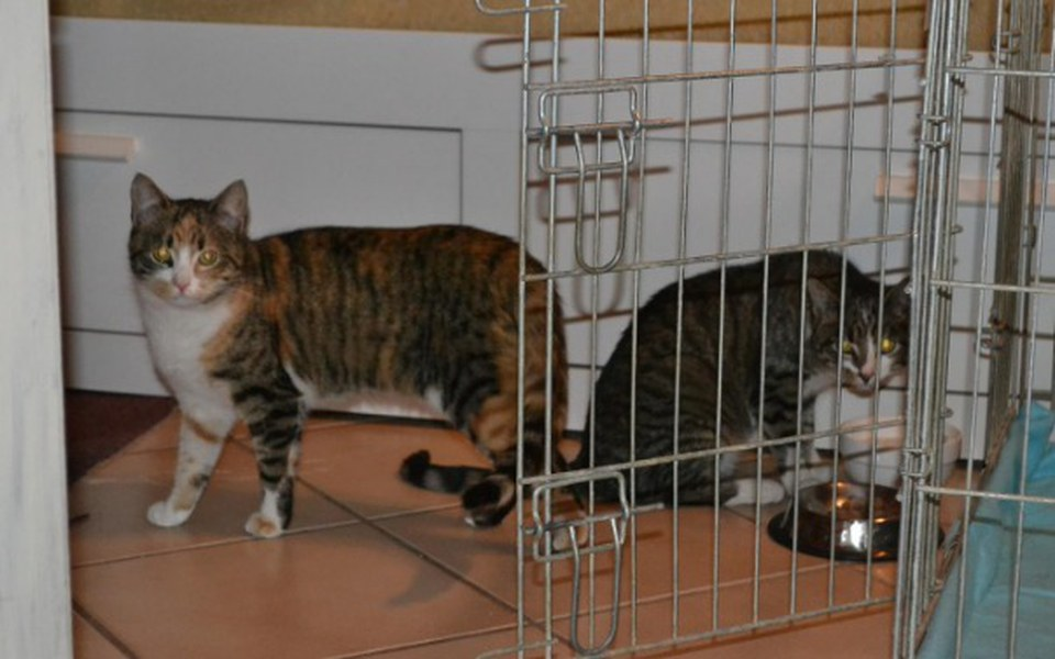 Zbiórka Masza, Sasza i kocia spółka  :) - zdjęcie główne