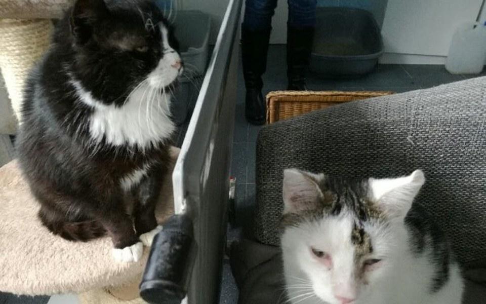 Zbiórka Ciepło dla kotów z TOZ Włocławek - zdjęcie główne