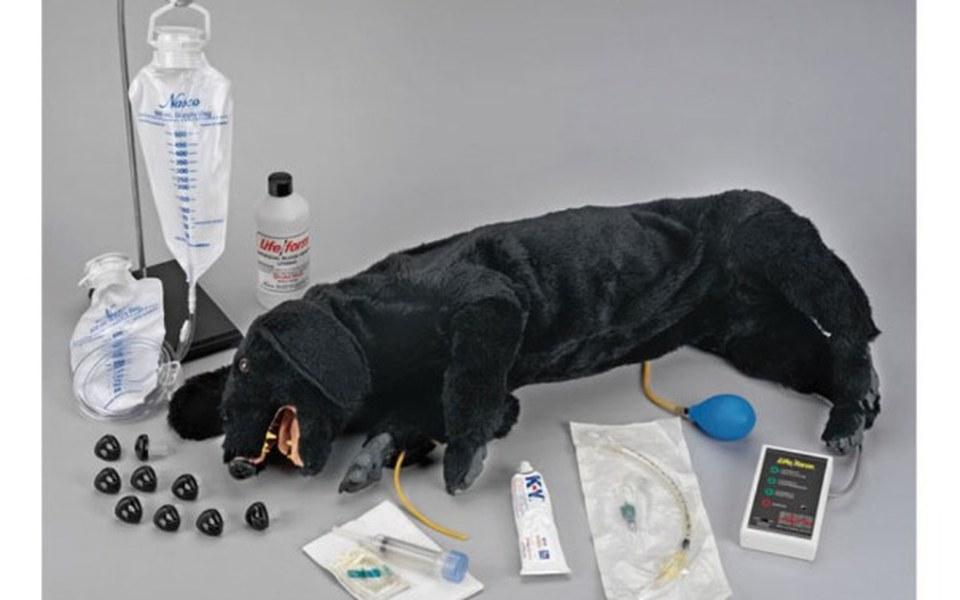 Zbiórka fantom do ratowania życia psów - zdjęcie główne