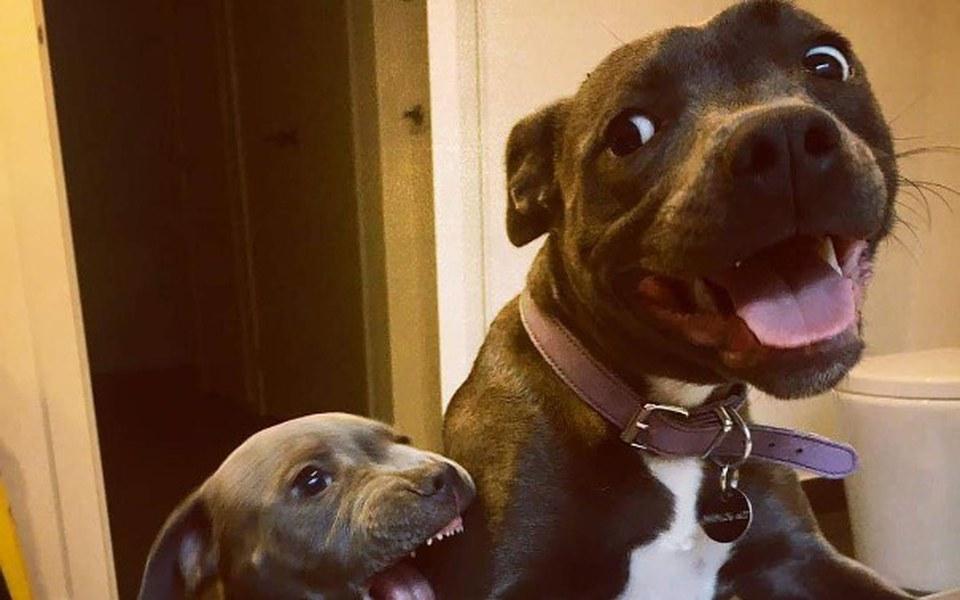 Zbiórka Zbiórka na karmę dla psów!!! - zdjęcie główne