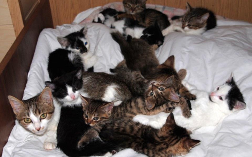 Zbiórka Pomóż Pani Józefie i jej kotom - zdjęcie główne