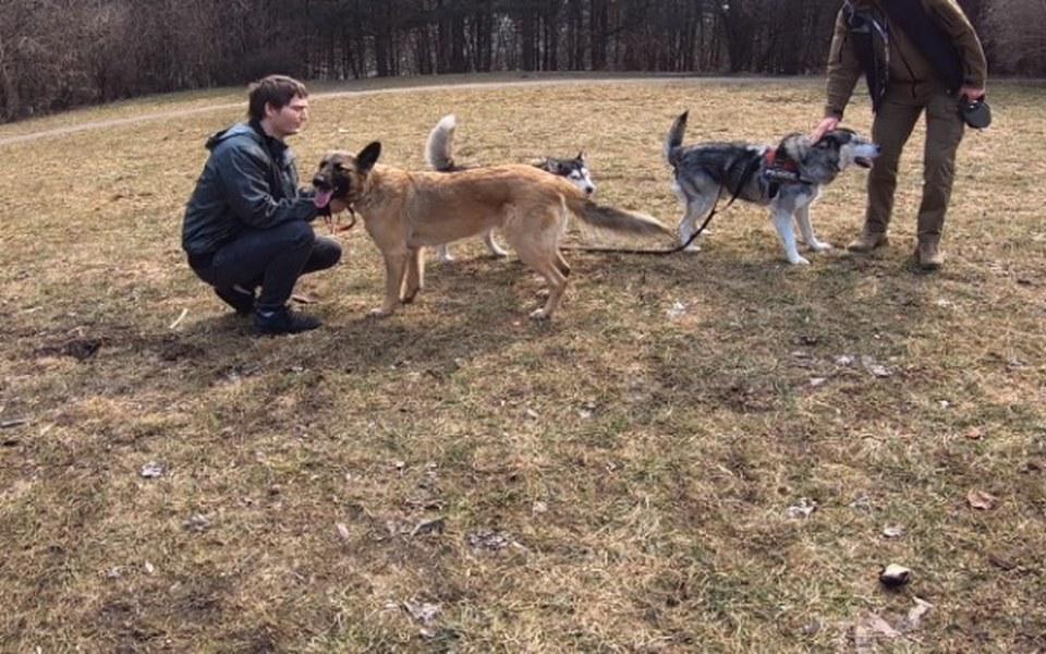 Zbiórka Ośrodek rehabilitacji psów - zdjęcie główne
