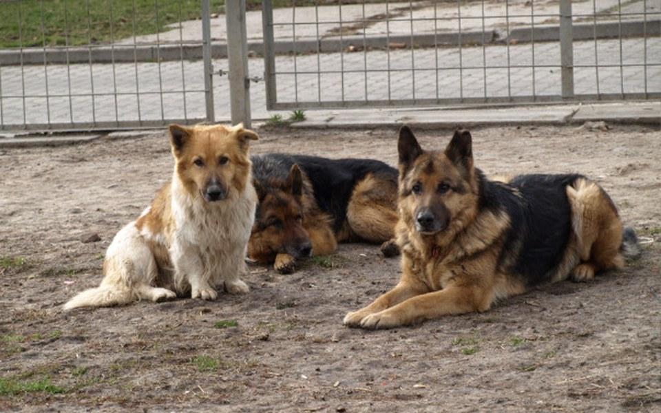 Zbiórka Azyl dla bezdomnych zwierząt - zdjęcie główne