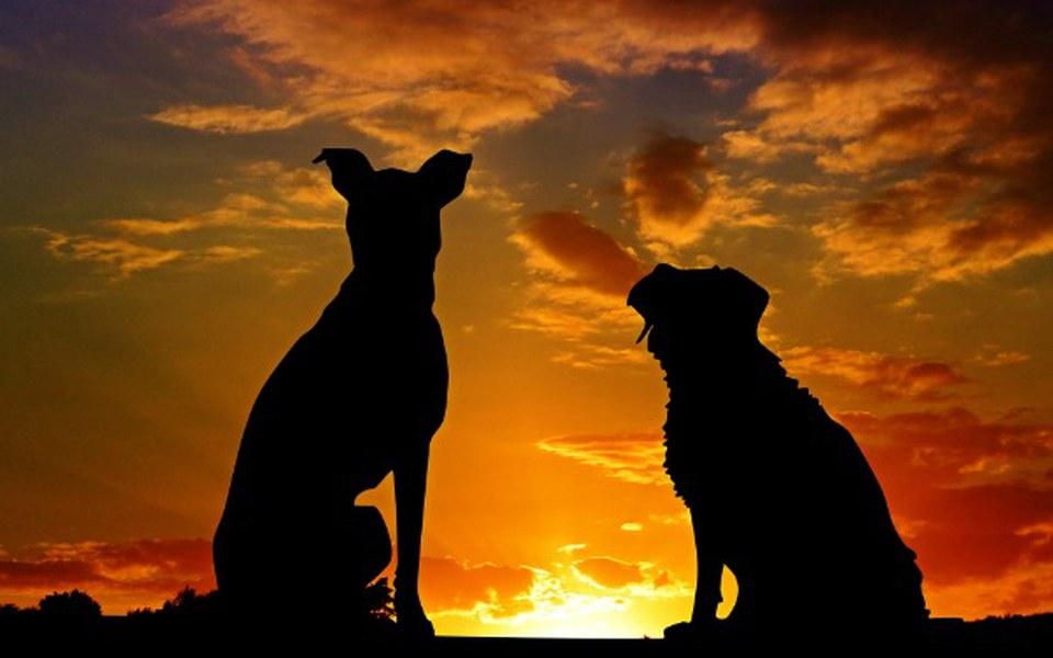 Zbiórka Dom dla niechcianych zwierząt - zdjęcie główne