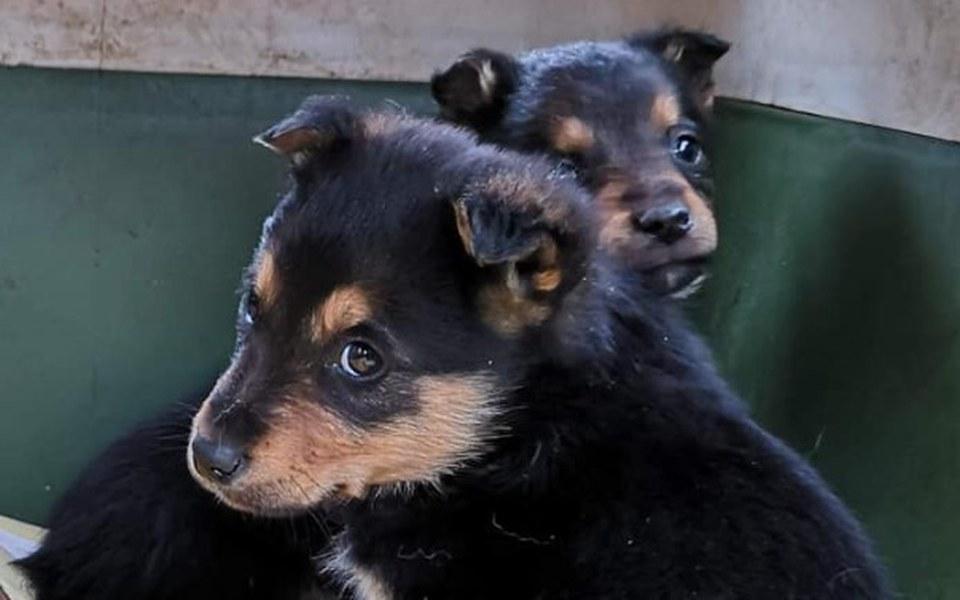 Zbiórka Psie dzieci proszą o wsparcie - zdjęcie główne