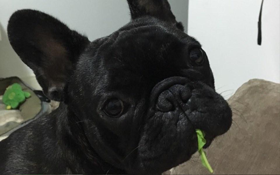 Zbiórka Pomoc dla Rufusa - zdjęcie główne